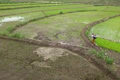 Rice field (Julien Falissard) Tags: world voyage city travel panorama tourism water field indonesia foot asia tour rice culture tourist du asie yogyakarta pied monde nourriture ville riz champ plat 2015 indonsie
