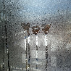 one for each of my loves (ladybugdiscovery) Tags: love window heart condensation