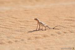 3-Oman-Desert-Marathon-Day-6_7248