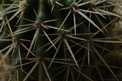 Cactus (renata.mandracio) Tags: brazil cactus verde green planta sc nature brasil flora nikon plantas desert natureza thorns santacatarina thorn espinhos cacto deserto espinho oeste chapec d3100 nikond3100