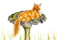 The Old Bird Bath (GREY PEPPER ART) Tags: cats art animals ginger birdbath kittens felines watercolours marmalade