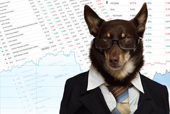 The Stock Broker (aussiegall) Tags: dog ally stock australia sell currency broker kelpie shares exchangerate