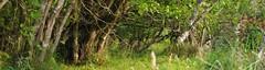 Hazel Coppice (Alexander Michael Crow) Tags: wood autumn trees color tree fall leaves scotland highlands colours hazel caithness coppice strath dunbeath neilgunn wooodland dunbeathstrath highlandrivercountry