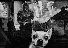 """ The Bodyguard "" By Mirela Momanu (Mirela Momanu) Tags: reflectionsblackandwhite littledoglaughednoiret artlibres artlibrewinner"