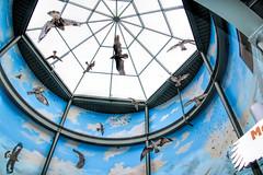 Fowl in Flight inside Eagle Center (Gary.Lamprecht) Tags: canon eagle baldeagle mississippiriver tamron mn topaz wabasha nationaleaglecenter t6s