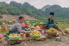 K0737.0414.QL6.Lng Lung.Vn H.Mc Chu.Sn La. (hoanglongphoto) Tags: people plant color fruit canon children asian three women asia market outdoor candid hill daughter mother vietnam peaches ba dailylife hillside sell motheranddaughter m willage hilltree colorimage ngi ch qu sellingfruit mu snla candidcapture nngthn cucsng ithng trem hmongpeople i ngoitri candidimage ql6 canoneos1dsmarkiii phn conngi congi thcvt chu mcchu ngnam top20travelpix bnhng lnglung chcc tnhin ngihmng bnlng carlzeissdistagont235ze bntricy nhmu icy quo mvcongi sni minimummarket chvenng countruyside sba chnh bnhoaqu chptnhin hnhnhtnhin chnthc