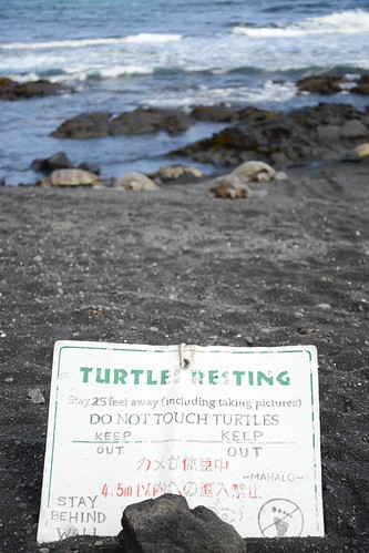 Turtles (1 of 1)