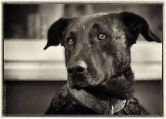 Mola (tolltroll11) Tags: dog dogs hund hunde bardino