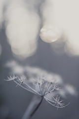 Evenings chill (lidili) Tags: blue winter sun cold alaska evening spring flora bokeh outdoor small growth