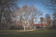 Sad Janka Kra (jancza) Tags: park city trees nature spring sad capital slovakia bratislava janka krala