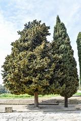 Impressive Trees (simonevanbergen) Tags: tree architecture garden spring spain ruins roman mosaic seville structure italica svb romanemperor simonevanbergen