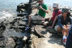 IMG_7657 (chupalo) Tags: sealions lavarocks islasplaza
