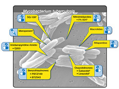 New Candidate TB Drugs Under Development (NIAID) Tags: tb tuberculosis xdrtb mycobacteriumtuberculosis