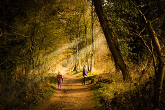 Exploring (Scruddy) Tags: wood uk trees light dog leaves sunshine st kids forest children bury suffolk spring nikon ray child play exploring east explore rays nikkor edmunds anglia burystedmunds 2770 nowton nowtonpark d810