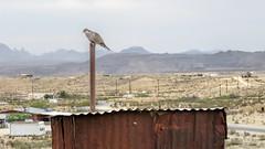 View from La Posada Milagro.
