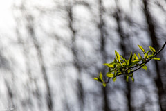 Spring I (lars1387) Tags: norway canon akershus 6d asker canon6d