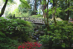 Japanese Garden (Hailey Owens) Tags: bridge flowers green japan canon garden japanesegarden portlandoregon pnw washingtonpark 30d
