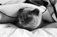 my cat (Magda Komorowska) Tags: blackandwhite analog cat 35mm olympus ishootfilm 35mmfilm fujifilm analogphotography olympusom10 filmphotography analogcamera filmisnotdead
