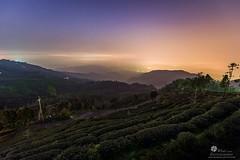 大崙山觀光茶園 (Wi 視覺) Tags: light sky cloud taiwan 南投 大崙山 台灣南投 銀杏茶園