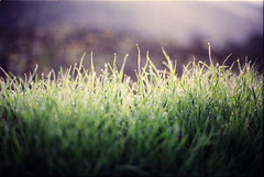 (the_analogue_me) Tags: film nature lomo lomography alba natura erba campo fields pelicula analogue rugiada prato analogica mattino pellicola lomofilm niccollandi niccololandi theanalogueme