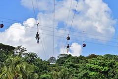 MegaZip (chooyutshing) Tags: singapore aerial adventure sentosa flyingfox silosobeach adventurepark megazip imbiahhill
