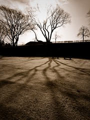 Shadow (akashirokiiro) Tags: shadow tree japan aomori hachinohe    xperia