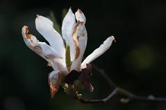 Rotterdam 10-04-2016 SM-6 (Pure Natural Ingredients) Tags: park flowers holland garden spring nikon d70 nederland thenetherlands sigma f18 f28 bloemen euromast zuid 105mm niceweather voorjaar schoonoord d90 50mmoutdoor botanicbotanishetuin