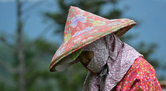 The lone tea picker (Lost in Kaohsiung) Tags: female asia tea taiwan alishan teapicker