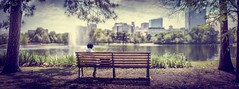 iRead (The unKnown Saif) Tags: park street panorama green nature beauty bench nikon pano exploring explorer ps read dslr d810