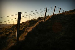 110.365.2016 (johnny the cow) Tags: sunset wales fence photo wire diary hill cymru farmland collection barbedwire 365 posts catalogue ceredigion 2016 aphotoaday 366 llanafan talfan