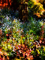 All the Colours of the Rainbow (Steve Taylor (Photography)) Tags: uk greatbritain shadow england plant flower tree london art nature sunshine wall woodland rainbow bush flora unitedkingdom vivid sunny bark gb colourful impressionist silverbirch forgetmenots