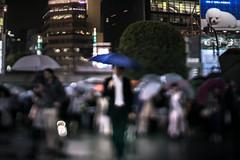 Conductor of rain (turntable00000) Tags: rain japan umbrella tokyo shibuya crosswalk extrabokeh