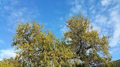 Spring at home, Sardinia (Chickenhawk72) Tags: sardegna italy primavera evening spring italia sardinia sera quercia sughero