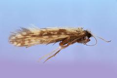 Primozich, Berkshire Co. MA (Macroscopic Solutions) Tags: wasp arachnid solutions macropod casing diptera hymenoptera pseudoscorpion caddisfly macroscopic hemptera focusstacking macroscopicsolutions