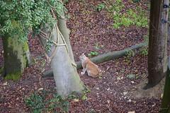 was bestimmt zu nass (dieunsoziale) Tags: zoo katze osnabrck tier luchs raubtier