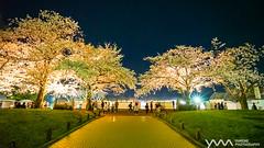 Expo70 Commemorative Park / Osaka, Japan (yameme) Tags: travel flowers nature japan night zeiss nightshot sony evil   sakura cherryblossoms osaka alpha  kansai      a7ii    mirrorless expo70commemorativepark emount a7m2 fe1635mmf4
