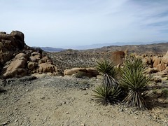 rocks and spines (h willome) Tags: california desert hiking joshuatree joshuatreenationalpark 2016 cottonwoodsprings