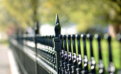 One of Seven Sisters (Lala Lands) Tags: dof bokeh smithcollege hff nikkor105mmf28 happyfencefriday springafternoonlight nikond7200 springironfence springisleavingout oneofsevensisters