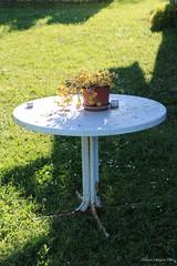 tavolino di campagna (xiaolifra) Tags: plant table countryside campagna tavolino pianta