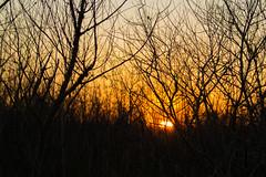 PJF_8946 (pfotography93) Tags: sunset bird heron nature pig crane hike deer owl bison