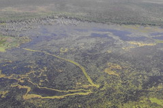 Scenic Flight, Kakadu National Park, Northern Territory, Australia (ARNAUD_Z_VOYAGE) Tags: street city building art beach nature architecture landscape state action country capital australia northern region department territory municipality