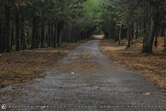 In the woods (nikhrist) Tags: road forest woods path nick greece parnitha attiki christodoulou