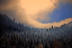 Winter Sky (Marie.L.Manzor) Tags: trees winter sky sun mist snow clouds forest sunrise landscape nikon 85mm nikkor snowscape snowscene winterscene marielmanzor nikon610