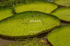 NO_Manaus0419 (Visit Brasil) Tags: travel brazil tourism horizontal brasil amazon rainforest natureza vitriargia manaus norte amazonas detalhe ecoturismo externa semgente diurna riosolimes visitbrasil
