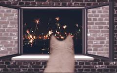 0:00 (JuriVLLMR) Tags: foto nacht fenster zimmer laut hund montage silvester neujahr mauer feuerwerk uhr 2016 schferhund beobachtung aufmerksam mitternacht raketen fensterrahmen silvesterraketen
