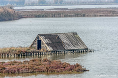 Abandoned hut in the brackish lagoon. (Ciminus) Tags: italy nature nikon wildlife marsh palude valli parcodeldeltadelpo naturesubjects nikond7200 afsnikkor80400vr brackishlagoon ciminodelbufalo