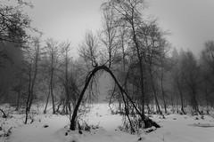 Herscheid - Nordhelle (MR@tter) Tags: schnee trees winter nature fog de geotagged deutschland nebel natur nrw sw nordrheinwestfalen sauerland herscheid nordhelle meinerzhagen mrkischerkreis sonydscrx100
