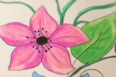 Foto 14 Proyecto 1/52 semanas (Sandra SCS) Tags: flor dibujo 52 proyecto semanas fotografa lpiz