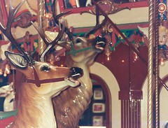 Jolly Reindeer Faces (Anne Abscission) Tags: summer film animals oregon analog 35mm vintage reindeer lights amusement seaside downtown ride faces pentax antique carousel deer bulbs oregoncoast expired summerfun 100asa towncenter seasideoregon dentzelcarousel filmphotography ferrania ferraniasolaris dentzel pentaxzoom90wr seasidecarouselmall