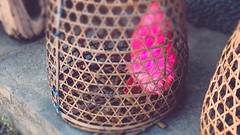 10:03 (rowanallen) Tags: travel pink november bali indonesia october village traditional cage east dyed cockerel candidasa tenganan